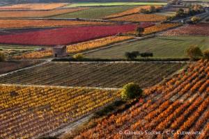 Vignes de la vallée du Salagou
